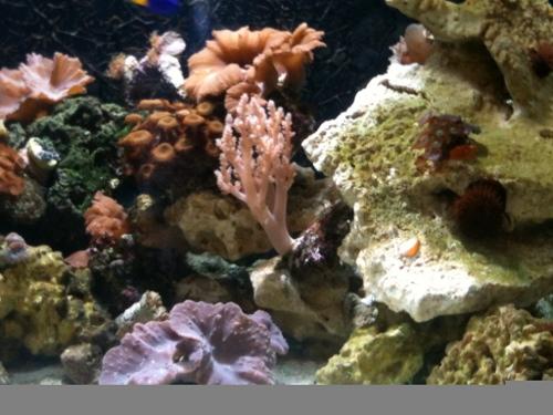 Roys reef tank leicester aquatics