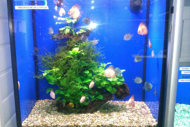 Gallery shop pics leicester aquatics tropical fish for Saltwater fish pond