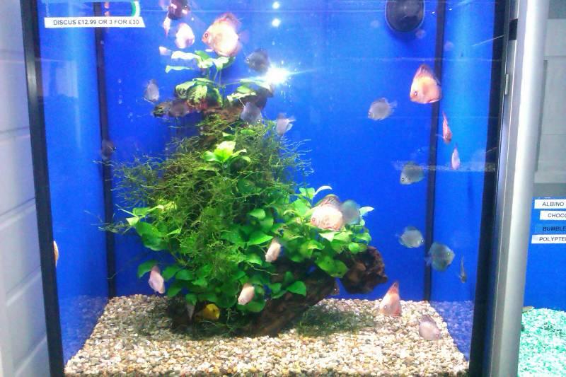 Gallery Shop Pics Leicester Aquatics Tropical Fish Marine Fish Pond Fish And Corals