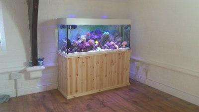 stus reef tank leicester aquatics